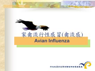 ??????? ( ??? ) Avian Influenza