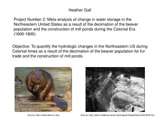 Heather Gall