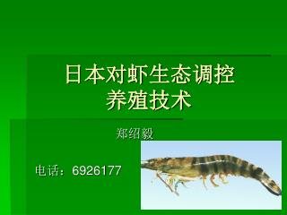 日本对虾生态调控           养殖技术