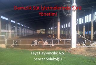 Damızlık Süt İşletmelerinde Sürü Yönetimi