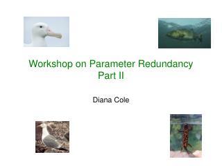 Workshop on Parameter Redundancy Part II