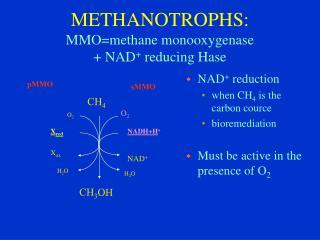 METHANOTR OPHS : MMO=methane  monooxygenase  +  N AD +  reducing Hase