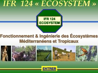 IFR  124   ECOSYSTEM