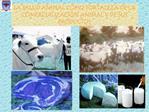 LA SALUD ANIMAL COMO FORTALEZA DE LA COMERCIALIZACI N ANIMAL Y DE SUS PRODUCTOS