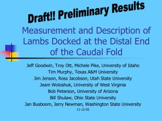 Measurement and Description of Lambs Docked at the Distal End of the Caudal Fold