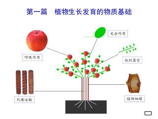 第一篇  植物生长发育的物质基础