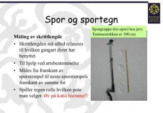 Spor og sportegn