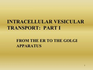 Intracellular vesicular transport:  Part I   From the  er  to the Golgi 	Apparatus