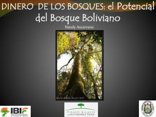 DINERO  DE LOS BOSQUES: el  Potencial del Bosque Boliviano