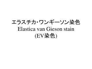 エラスチカ・ワンギーソン染色 Elastica van Gieson stain (EV 染色 )