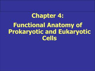 Chapter 4:   Functional Anatomy of Prokaryotic and Eukaryotic Cells