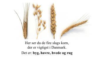 Her ser du de fire slags korn,  der er vigtigst i Danmark. Det er:  byg, havre, hvede og rug