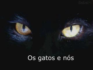 Os gatos e n s