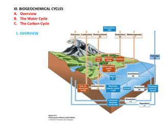 III. BIOGEOCHEMICAL CYCLES Overview The Water Cycle The Carbon Cycle   1. OVERVIEW