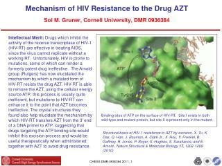 Mechanism of HIV Resistance to the Drug AZT Sol M. Gruner, Cornell  University,  DMR 0936384