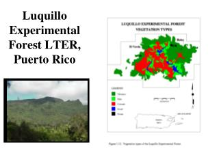 Luquillo Experimental Forest LTER, Puerto Rico