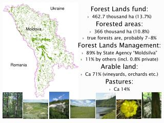 Forest Lands fund: 462.7 thousand ha (13.7%) Forested areas: 366 thousand ha (10.8%)