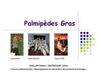 Palmip des Gras