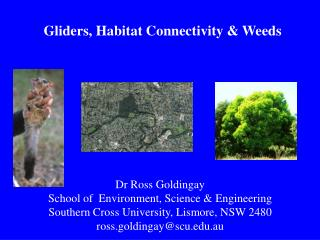 Gliders, Habitat Connectivity & Weeds