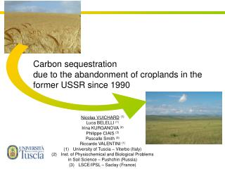 Carbon sequestration  due to the abandonment of croplands in the former USSR since 1990