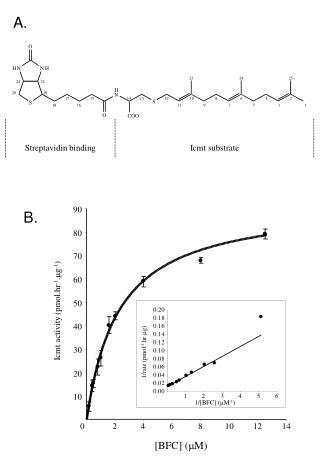 Streptavidin binding