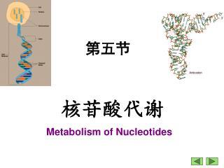 Metabolism of Nucleotides