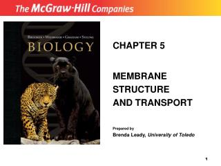 CHAPTER 5 MEMBRANE STRUCTURE AND TRANSPORT Prepared by Brenda Leady,  University of Toledo