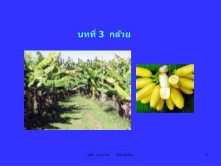 บทที่ 3  กล้วย