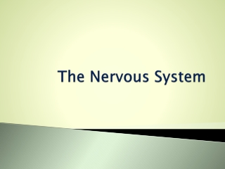 NEURON-DO   The Way of The Neuron