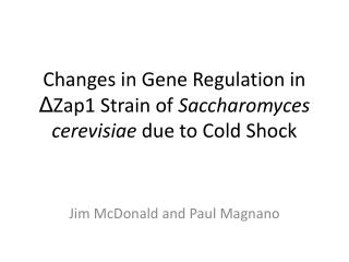 Changes in Gene Regulation in  Δ Zap1 Strain of  S accharomyces  cerevisiae due to Cold Shock