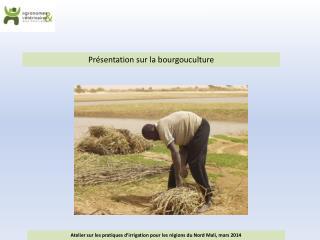 Pr�sentation sur la bourgouculture