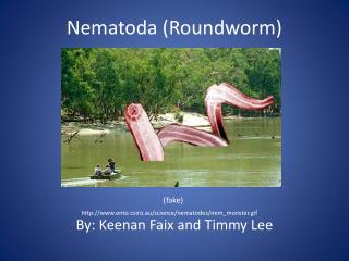 Nematoda (Roundworm)