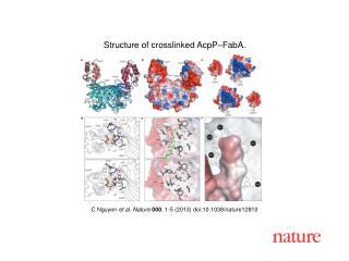 C  Nguyen et al. Nature  000 , 1-5 (2013)  doi:10.1038/nature12810
