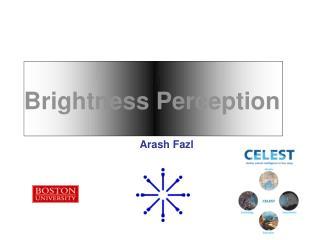 Brightness Perception