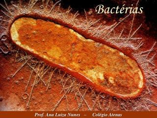 Bact�rias