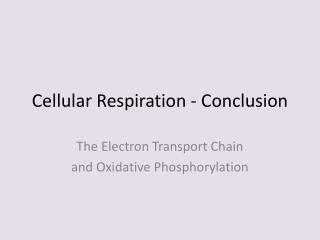 Cellular Respiration - Conclusion