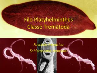 Filo Platyhelminthes Classe Trematoda