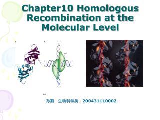 Chapter10 Homologous Recombination at the Molecular Level