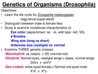 Genetics of Organisms (Drosophila)
