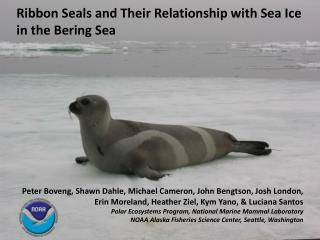 Ribbon Seals and Their Relationship with Sea Ice in the Bering Sea
