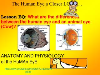The Human Eye a Closer LOOK…