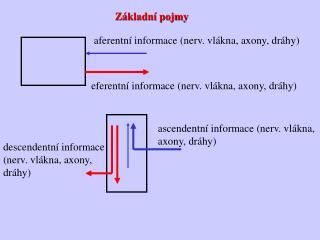 aferentní informace (nerv. vlákna, axony, dráhy)