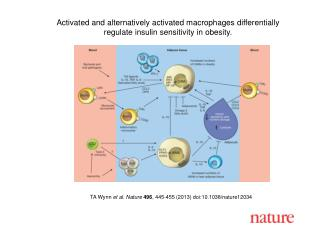 TA Wynn  et al. Nature 496 , 445-455 (2013) doi:10.1038/nature12034