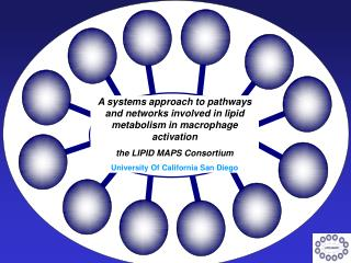 A systems approach to pathways and networks involved in lipid metabolism in macrophage activation
