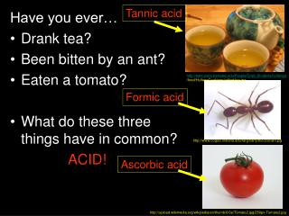 Have you ever… Drank tea? Been bitten by an ant? Eaten a tomato?