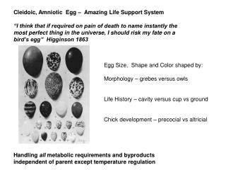 Cleidoic, Amniotic  Egg –  Amazing Life Support System