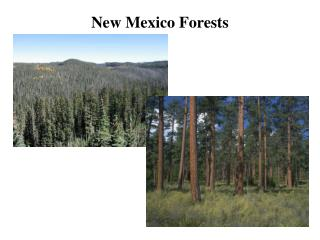 New Mexico Forests