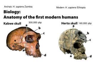 Archaic  H. sapiens  Zambia