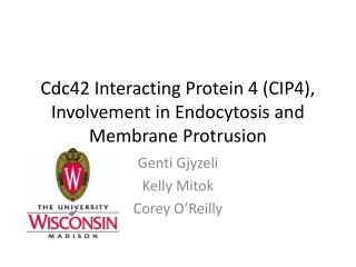 Cdc42 Interacting Protein 4 (CIP4), Involvement in Endocytosis and Membrane Protrusion
