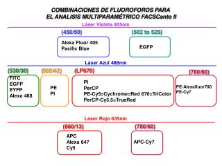 COMBINACIONES DE FLUOROFOROS PARA  EL ANALISIS MULTIPARAMÉTRICO FACSCanto II